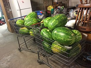 Shopping Carts Full of Donated Watermelons